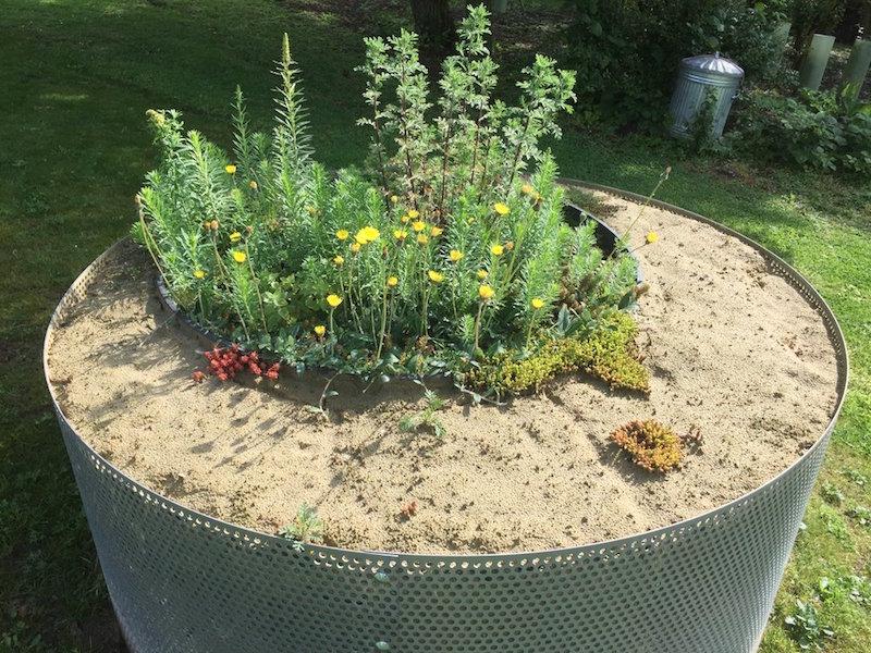 Sand Planter (Photo credit ©John Little)