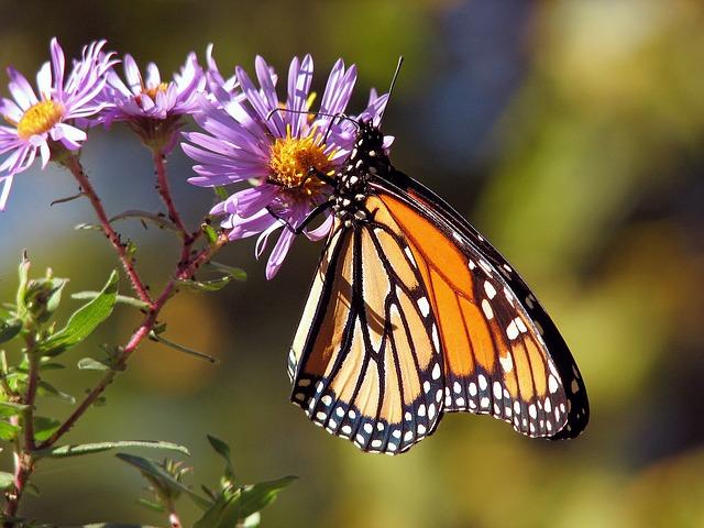 butterfly apps