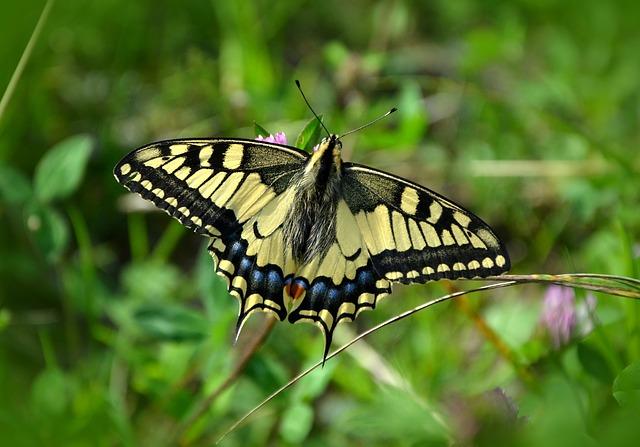 App Round-Up – Butterflies – Inside Ecology