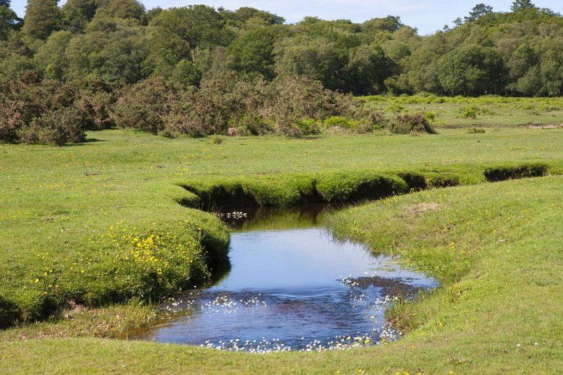 water voles hampshire