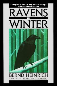 Charlie Hearst reviews Ravens In Winter by Bernd Heinrich