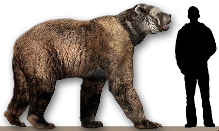 The Short-faced Bear (Arctodus simus)