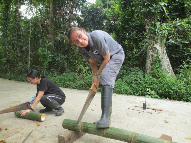 Jennifer sawing bamboo for enrichment activity (Photo credit ©Jennifer Cantlay)