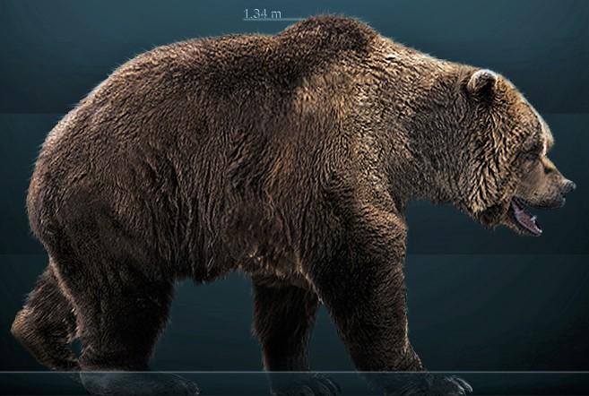 The huge Cave Bear (Ursus speleacus) (Photo credit ©Sergiodlarosa / Wikimedia Commons)