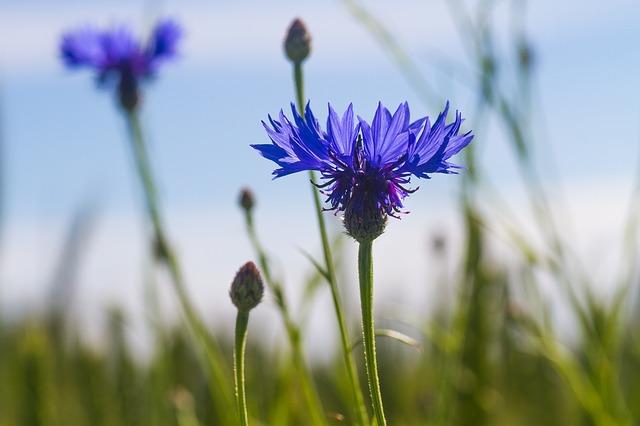 wild flower app