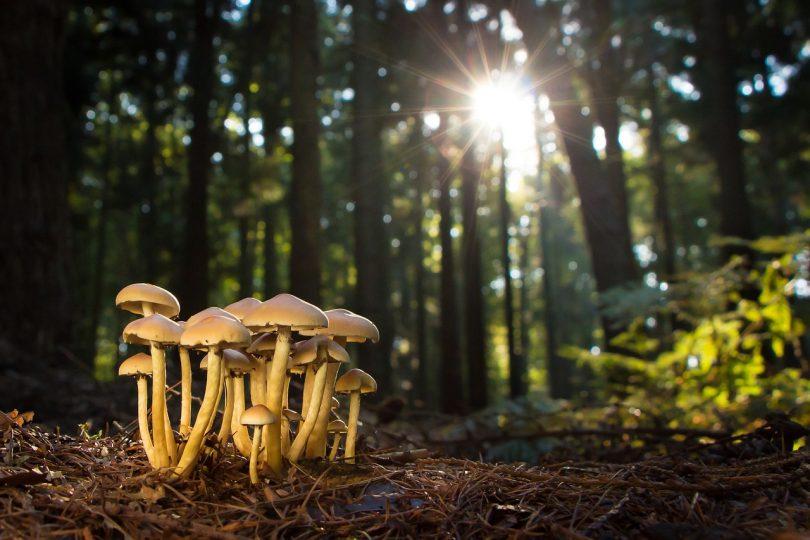 fungi identification app