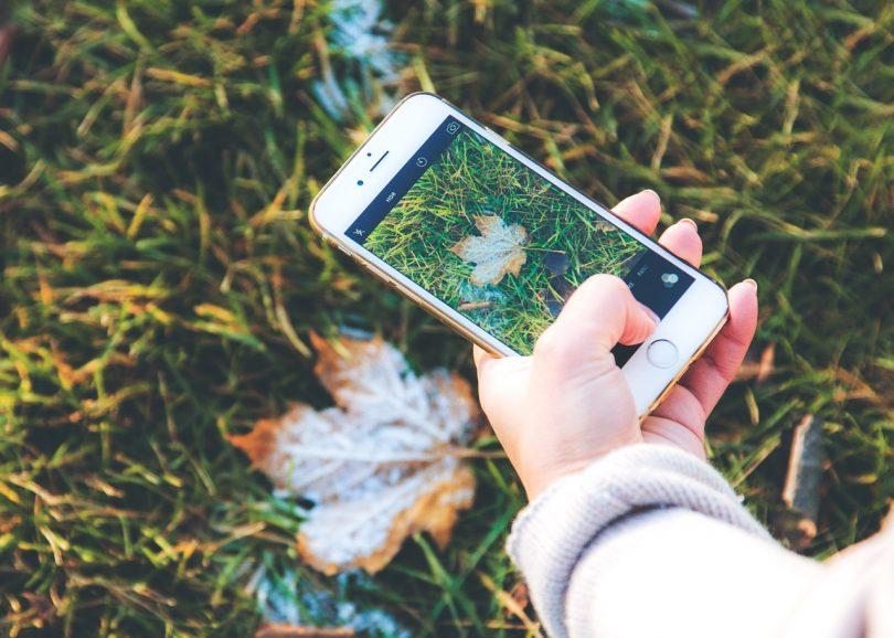 tree id app