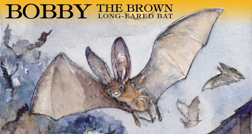 Bobby the brown long-eared bat