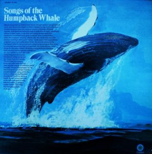 Album cover of Roger Payne's 1970 LP. Due to this record humpback whales are arguably to most listened to whales on earth.