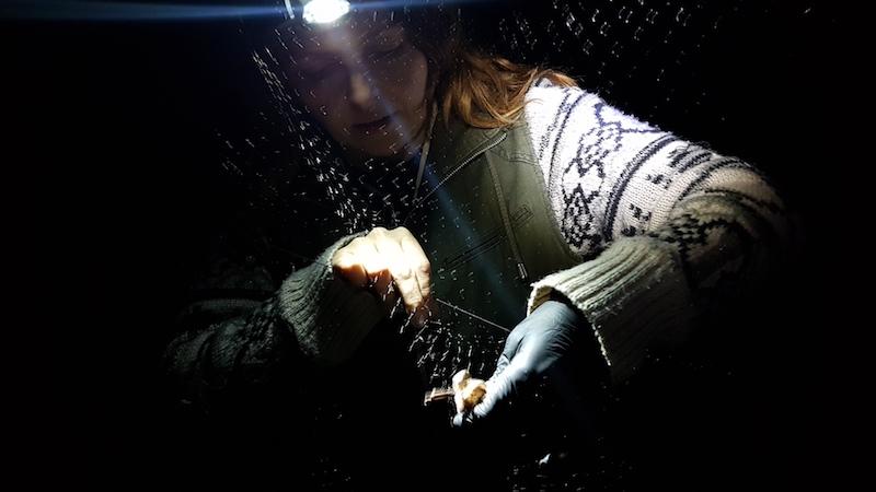 Morgan extracting a bat from a mist net (Photo credit ©Morgan Hughes)