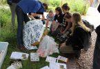 FSC biodiversity monitoring
