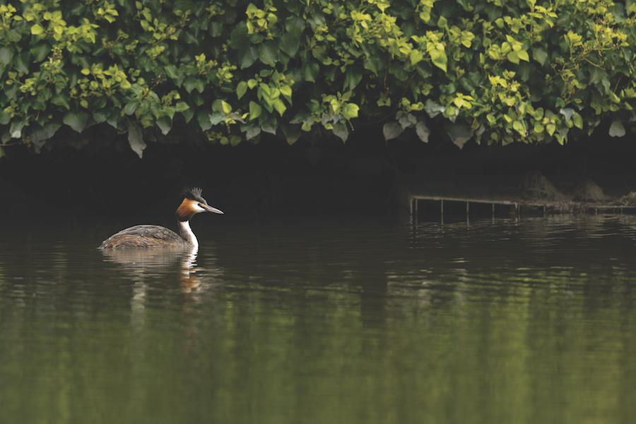 Walthamstow Wetlands ©Penny Dixie