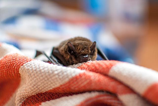 bat dialect