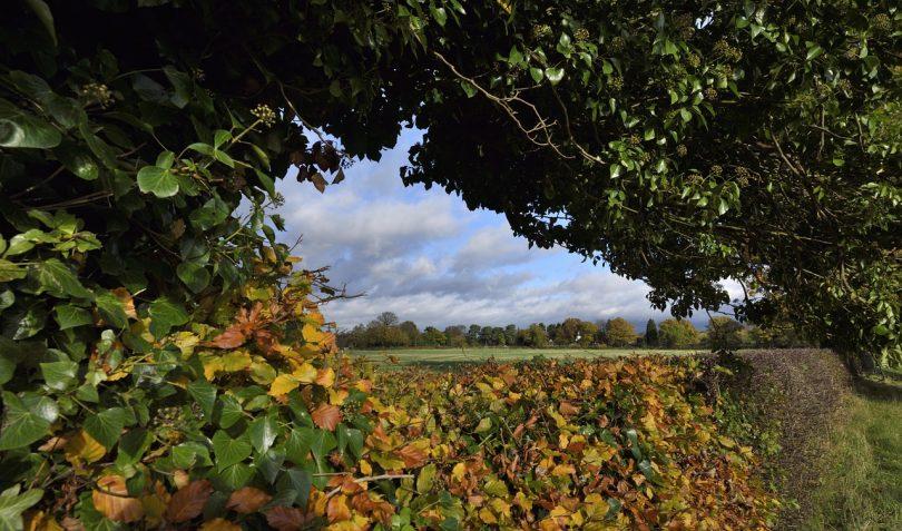 designing a hedge