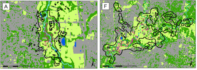 Powerful owl BBMM home-ranges against a land-use environmental layer. A is a female and B is a male. Thick black lines and thin pink lines represent entire home-range (99% BBMM) and core-range (50% BBMM) respectively. Background, light green represents grass/agriculture; grey is impervious surfaces; dark green is tree cover; light blue is perennial rivers and dark blue is water bodies. Figures from Nick Carter.