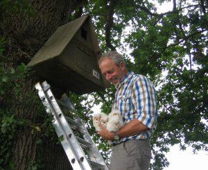 colin shawyer barn owl raptor