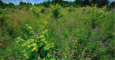 Hagge Woodland Project