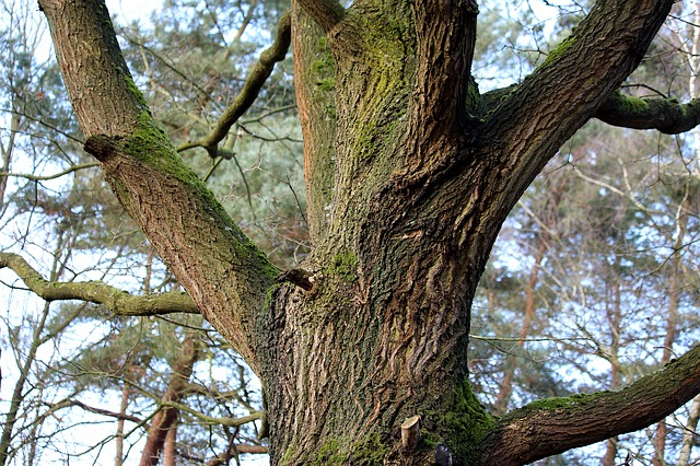ancient woodland veteran trees advice guidance