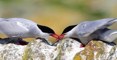 careers series rspb warden seabirds