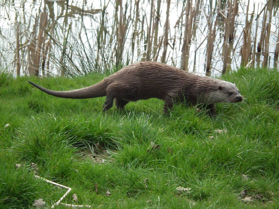Otter birmingham