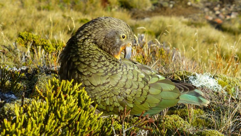 ecology consultant new zealand