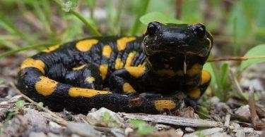 colour change amphibians