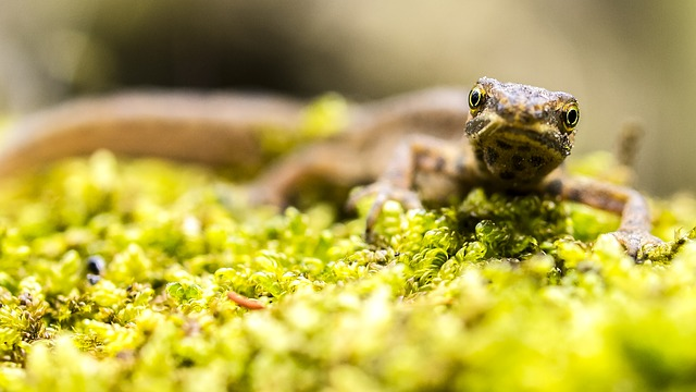 image identification newts