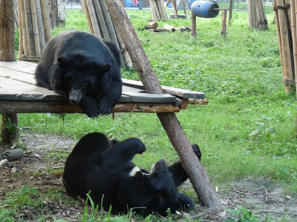 Bear games (Photo credit ©Jenny Cantlay)