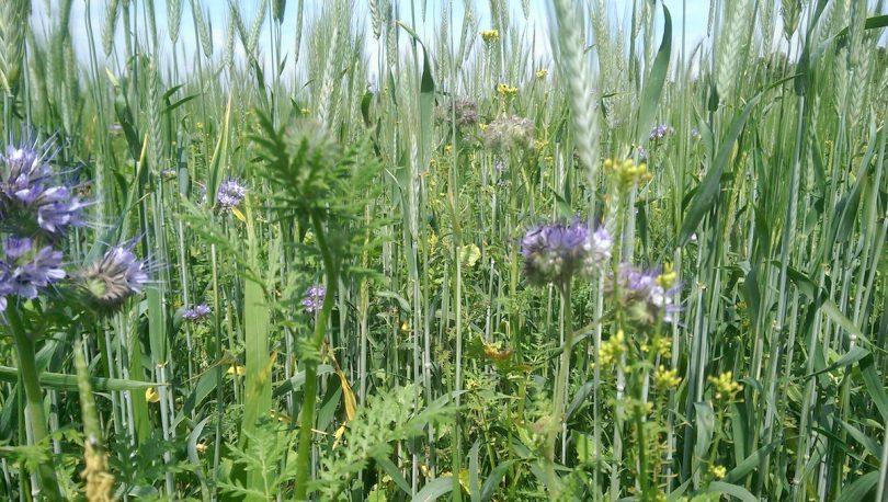 nature friendly farming brexit
