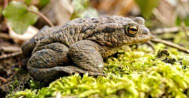 amphibians and climate change