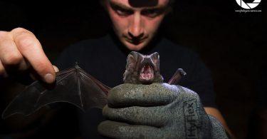 Gibraltar bats