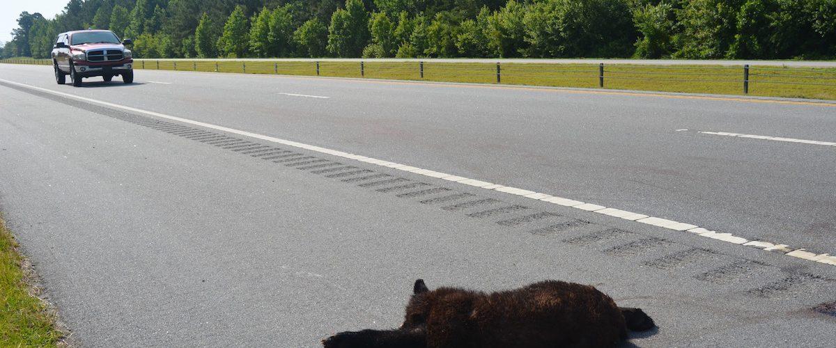 Roads and wildlife