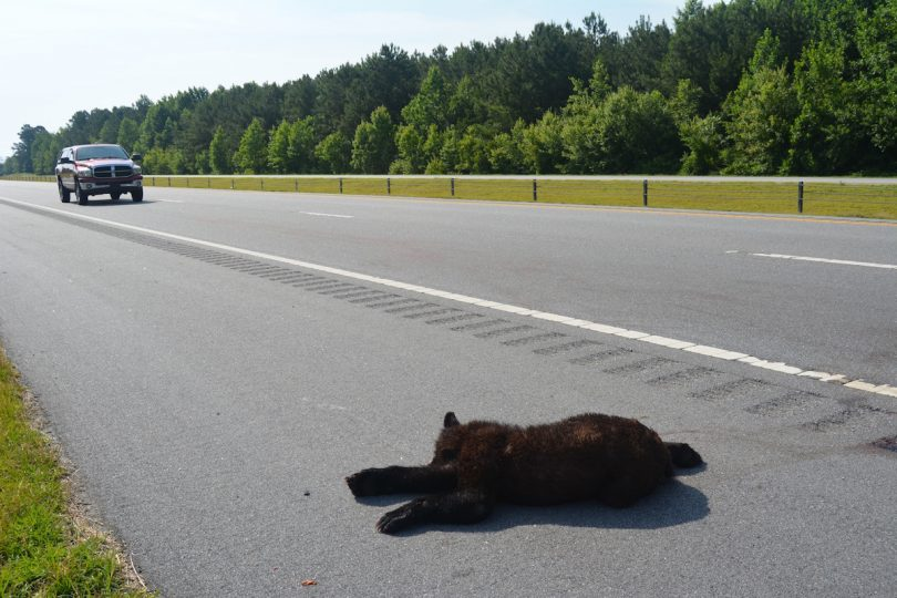 Roads and wildlife