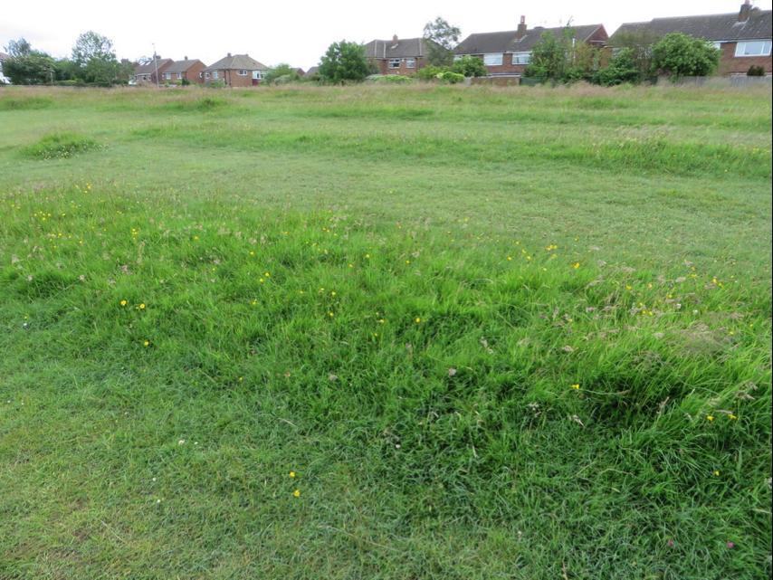 ancient grassland