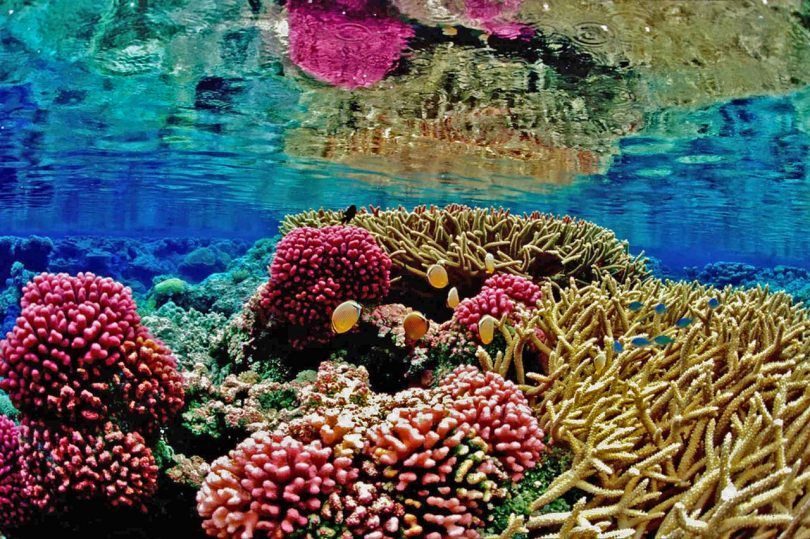 coral reef co2