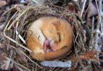 woodland management dormouse conservation