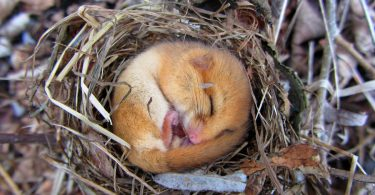 woodland management dormouse conservation
