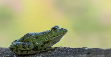 mutualism amphibians