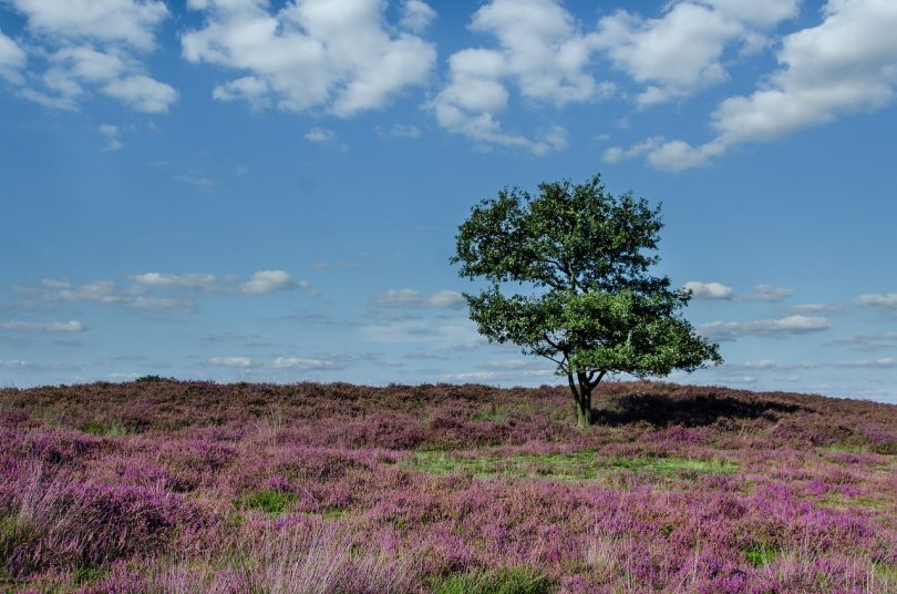 identifying heathland plants