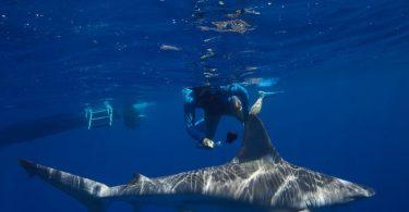 shark tourism conservation