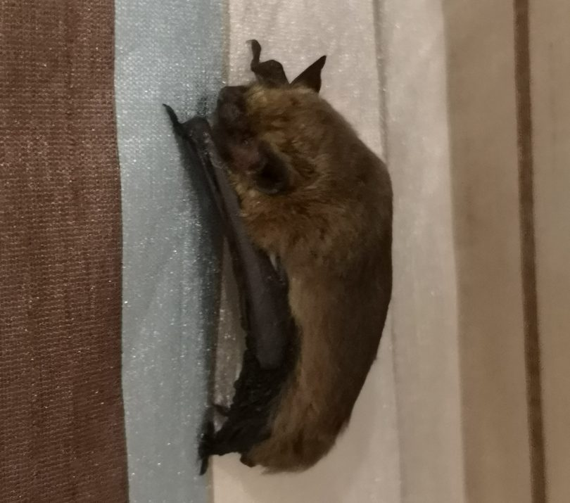 bats isle of scilly