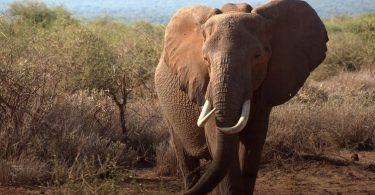 elephant mitigation conservation fences