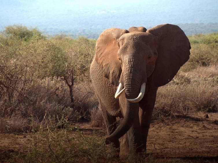 elephant mitigation conservation fences