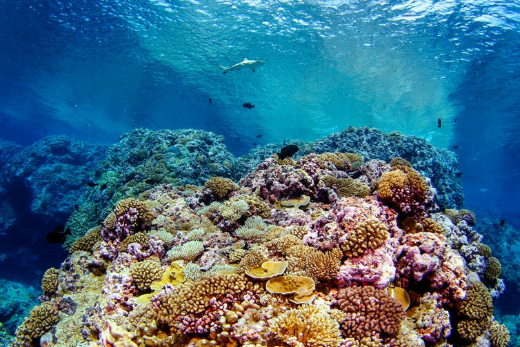 coral reef resilience