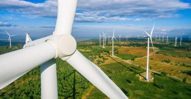 wind turbines ecology conservation apex predators