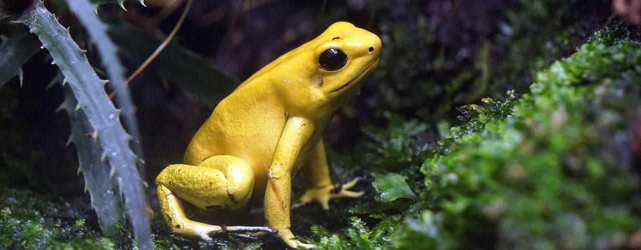 toxicity amphibians