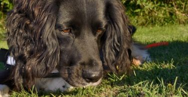 conservation detection dogs guidance