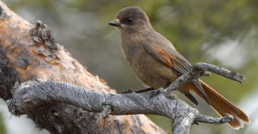 conservation areas birds