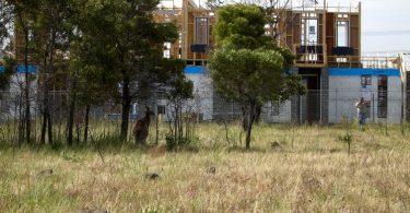 urban areas species conservation