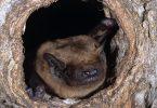 bats migration